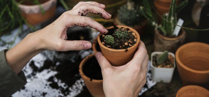 Découvrez six plantes faciles à jardiner