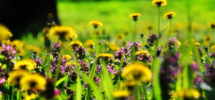 Conseils sur la création et l'entretien d'une prairie fleurie