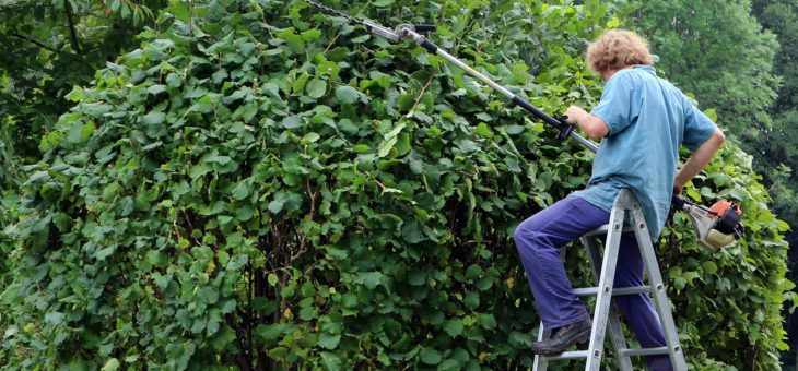 Des façons de se cacher des voisins dans sa cour