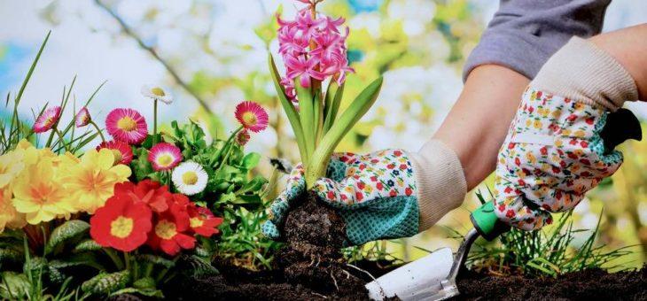Les outils de jardinage indispensables