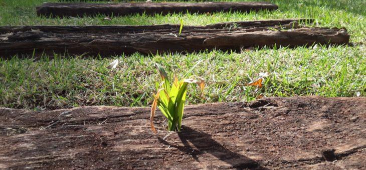 Le sol, élément de base du jardin.