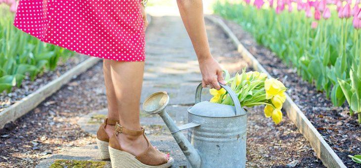Quels sont les travaux à réaliser dans le jardin en automne?