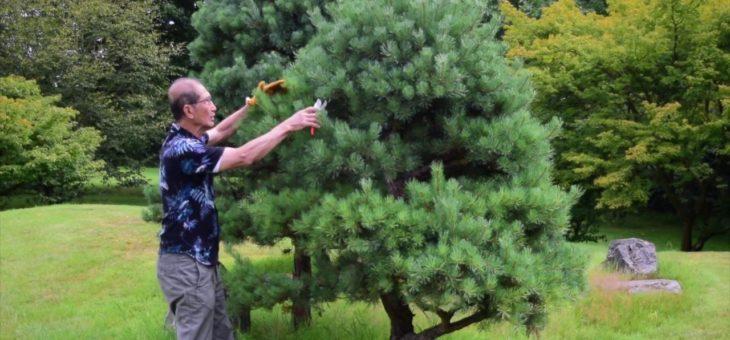 Élaguer les arbres de son jardin : les avantages à prévoir
