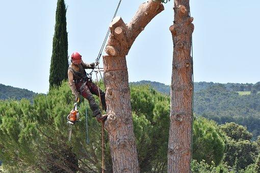 Les 3 raisons essentielles pour lesquelles vous devez élaguer un arbre
