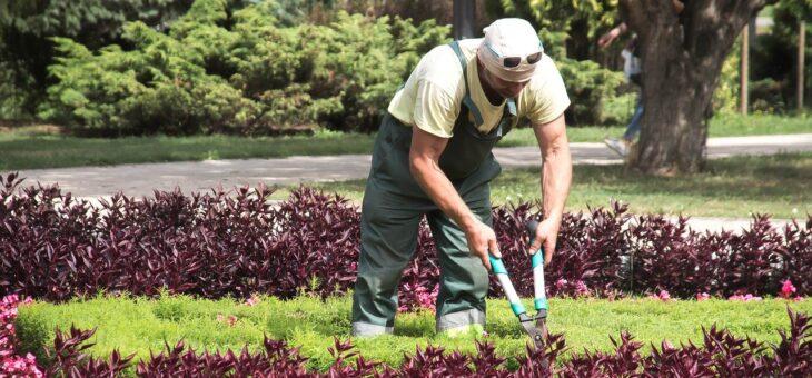 Les activités à faire pour bien entretenir son jardin
