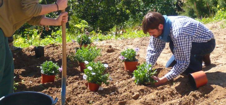 Les principes de base des travaux de jardinage
